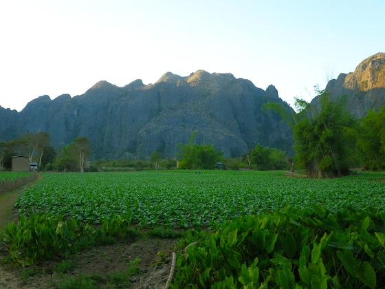Plantaciones del poblado de Ban Natane