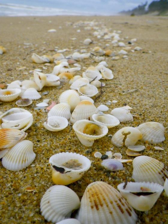 La arena estaba repleta de conchas