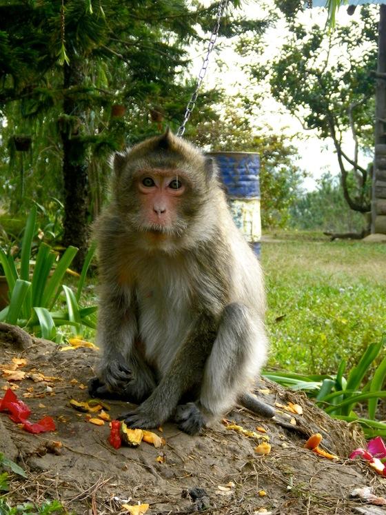 Un simpático mono que nos encontramos por el camino