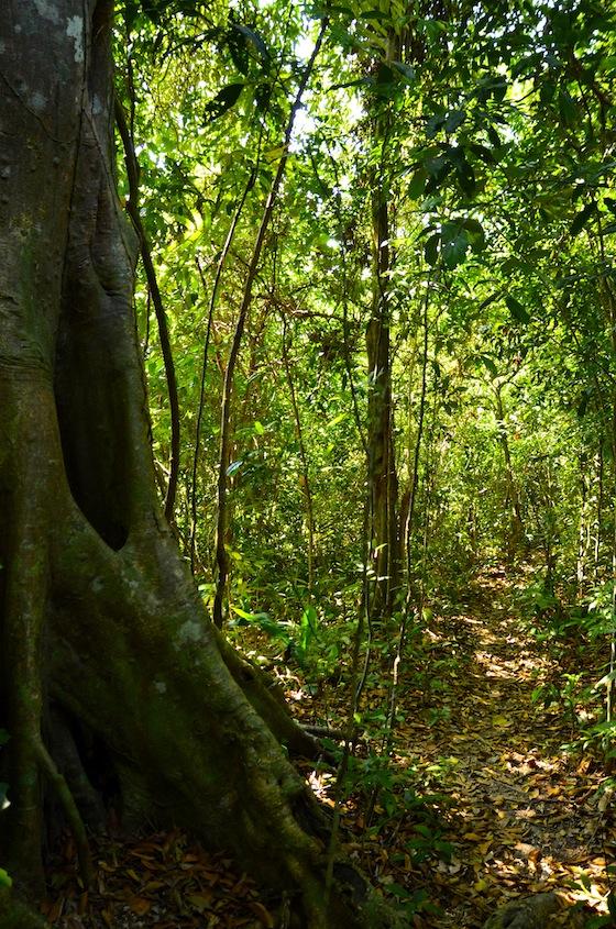 Jungla en el Parque Nacional de Kep