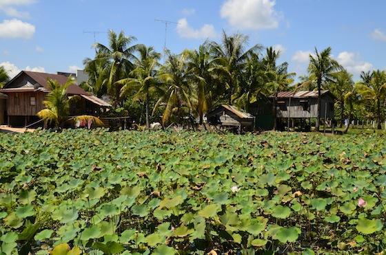 Alrededores de Kampot, Camboya