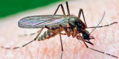 Cómo protegerse de los mosquitos, cómo evitar picotazos, cómo evitar malaria