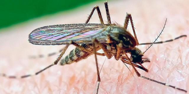 ¿Cómo defenderse de los mosquitos y evitar picotazos?
