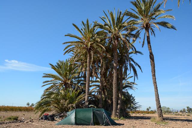 Acampando bajo las palmeras