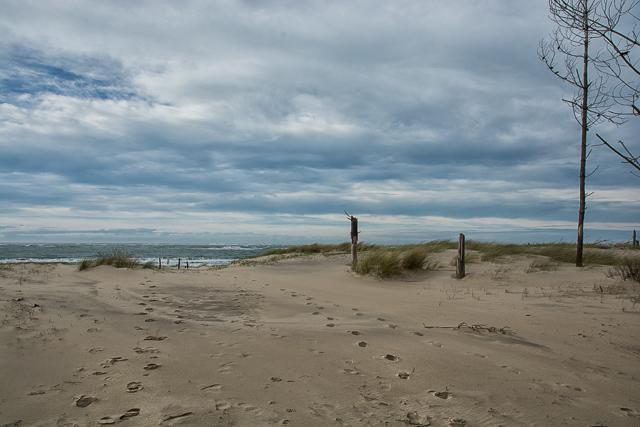 Caminando hacia el mar por las dunas francesas