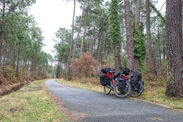 Carril bici por el bosque de pinos francés