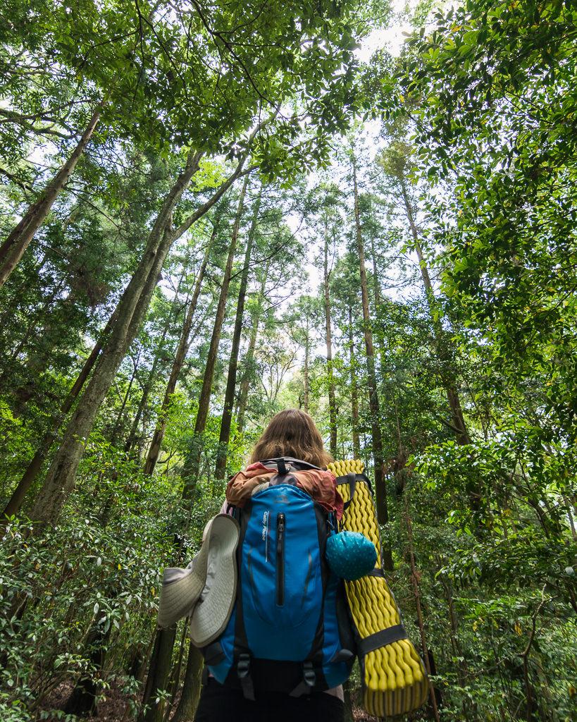 Senderismo en el camino de Kumano Kodo en Japon